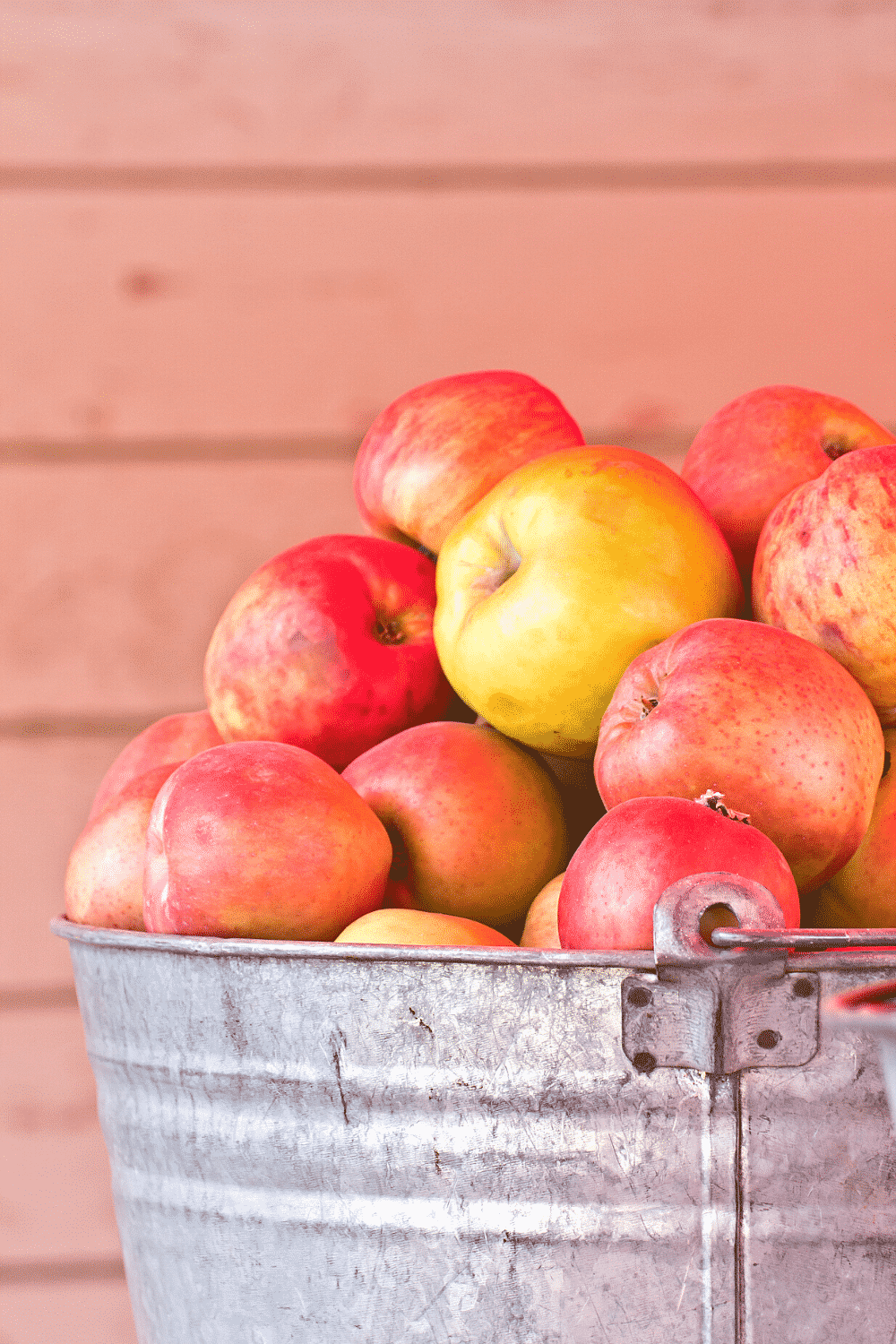 Apples in a tin bucket.